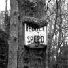 Reduce Speed (1)